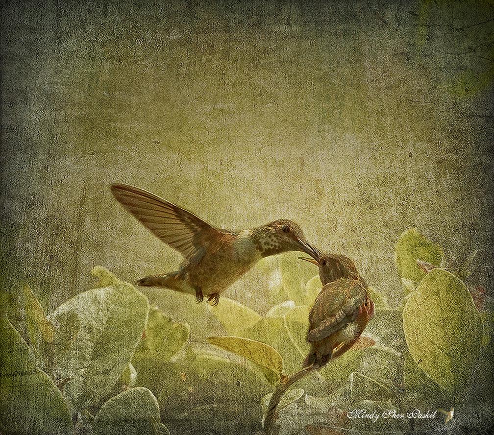 Botanical | Photography, Art, Life... by Mindy
